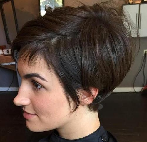 Pixie Bob (View 5 of 15)