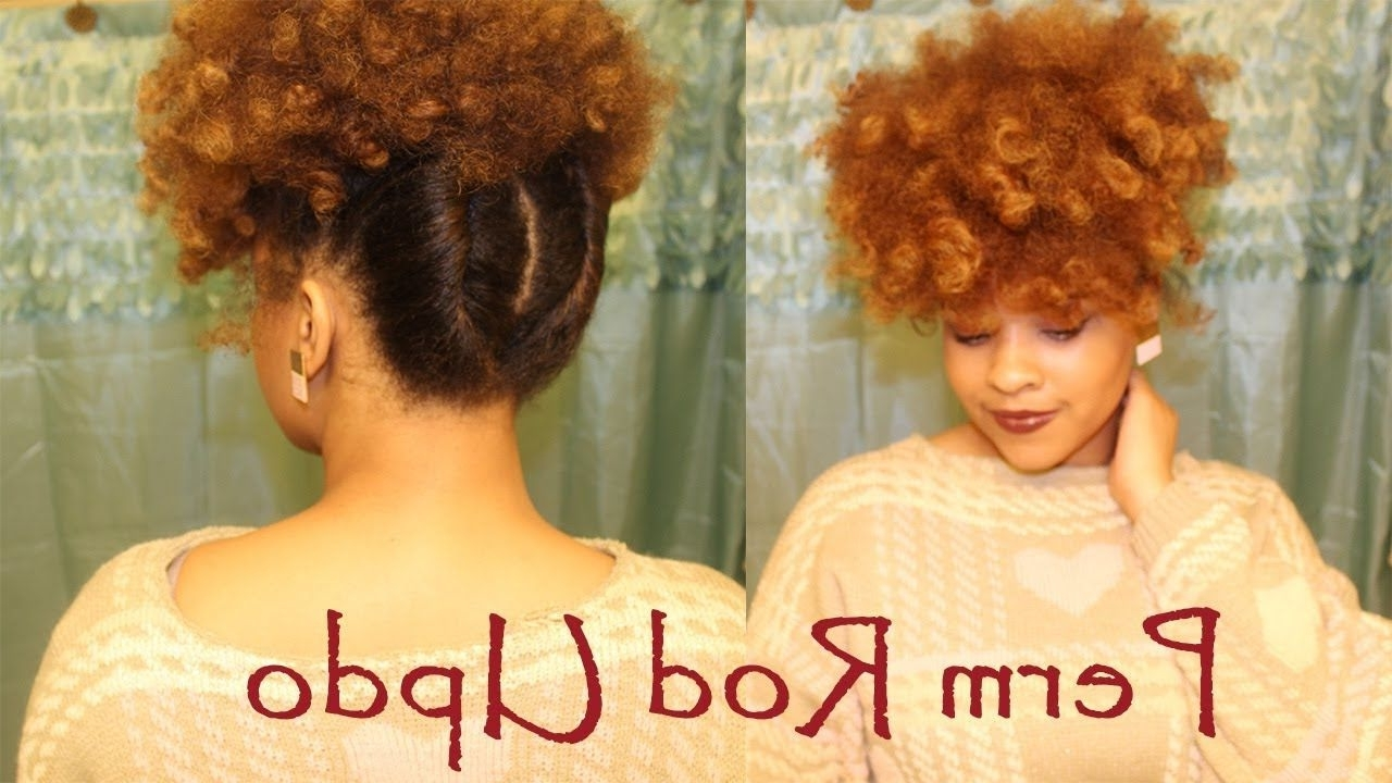 Quick Perm Rod Updo | Natural Hair: I Love The Back Of This Hairdo With Regard To Updo Hairstyles For Permed Hair (Gallery 6 of 15)