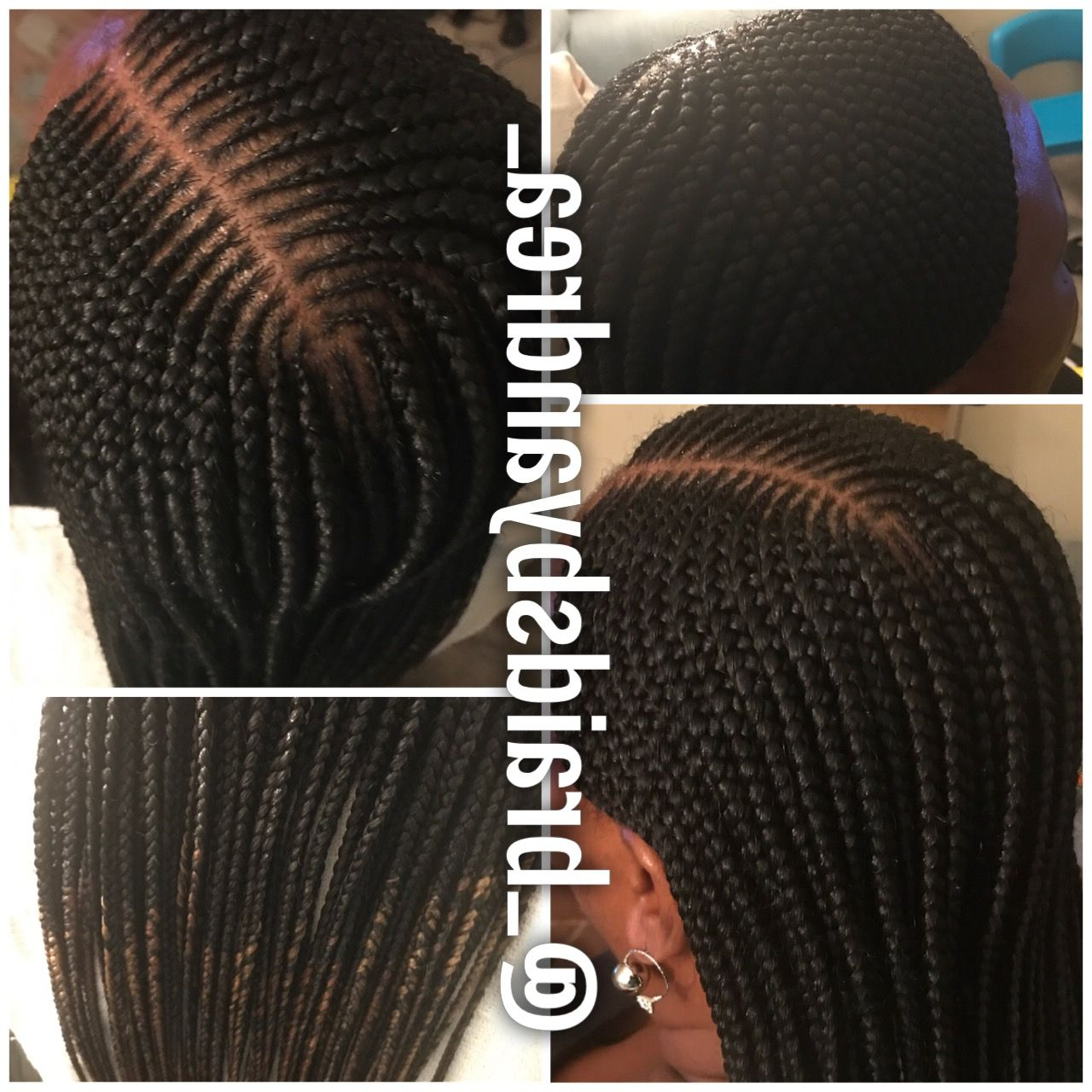 Feeder Braids Pertaining To Newest Straight Mini Braids With Ombre (View 11 of 20)