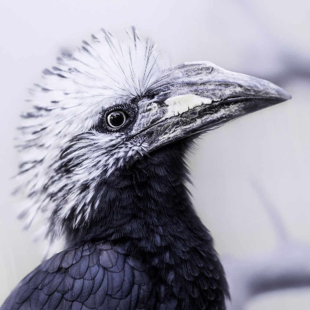 Featured Photo of Mohawk Haircuts With Curls For A Feathered Bird