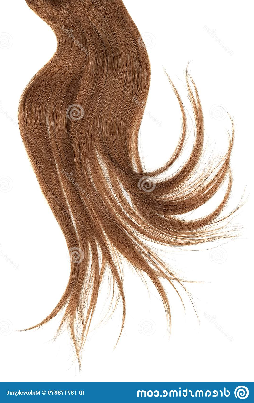 Disheveled Brown Hair Isolated On White Background Stock Inside Recent Two Tone Disheveled Layered Hairstyles (View 8 of 20)