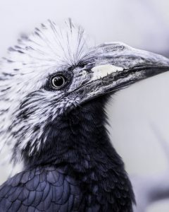 Mohawk Haircuts with Curls for a Feathered Bird